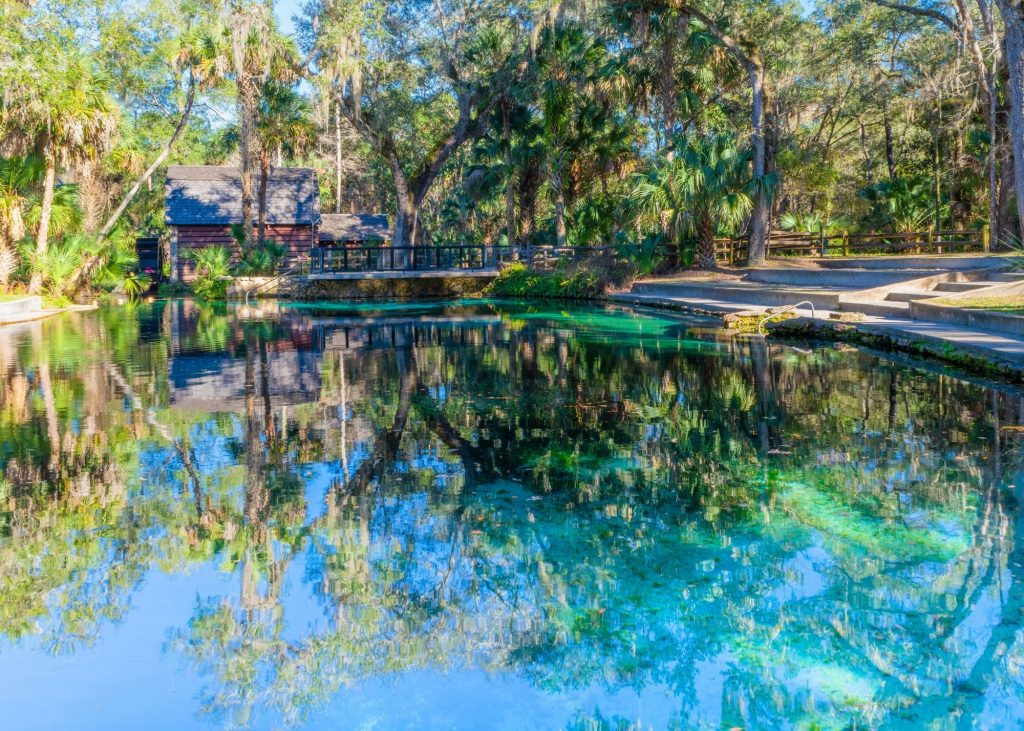 Juniper Springs, photo of the blue water spring