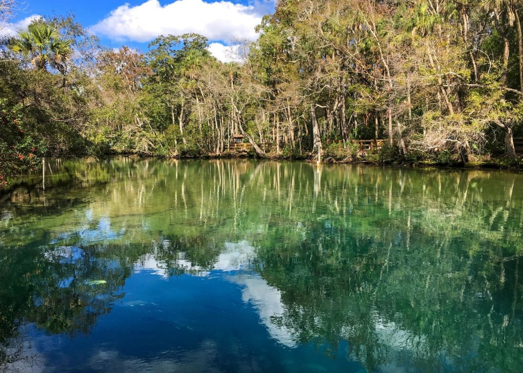 homosassa springs, photo of water/lake with trees in the background from the state park